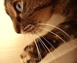 You Are The Cats Whiskers! :-)